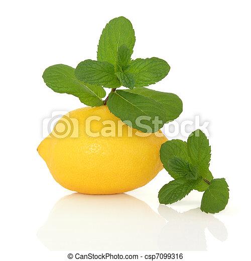 Mint Herb and Lemon Fruit - csp7099316