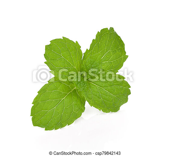 mint isolated on the white background. - csp79842143