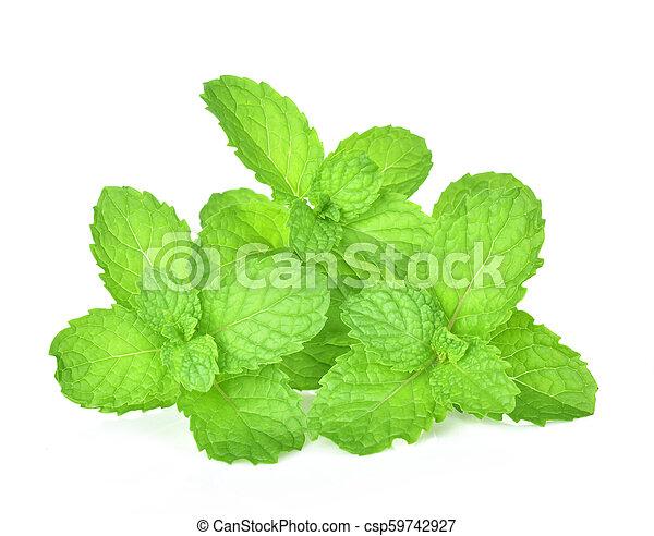 mint leaf on white background - csp59742927
