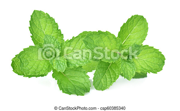 mint leaf on white background - csp60385340