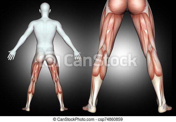 mis valeur, 3d, dos, jambe, mâle, muscles, figure, monde médical - csp74860859