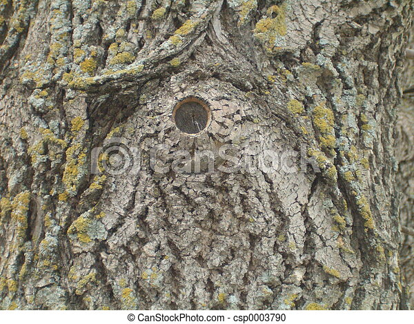 Missing Tree Knot - csp0003790