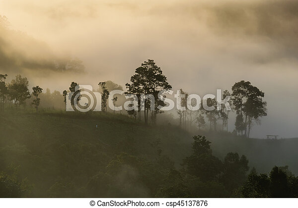 Mist covering tree on the mountain with sunlight - csp45137876