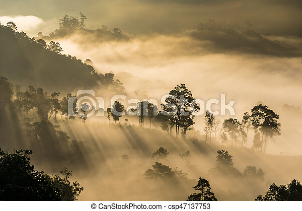 Mist covering tree on the mountain with sunlight - csp47137753