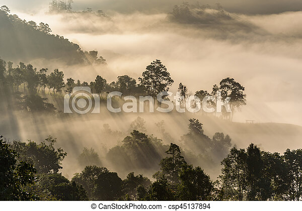 Mist covering tree on the mountain with sunlight - csp45137894
