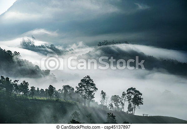 Mist covering tree on the mountain with sunlight - csp45137897