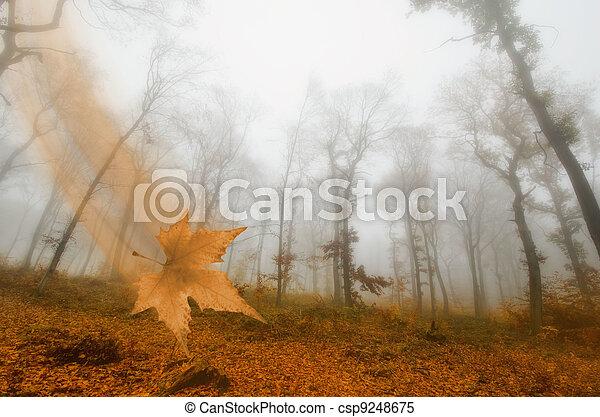 mist in the autumn forest - csp9248675