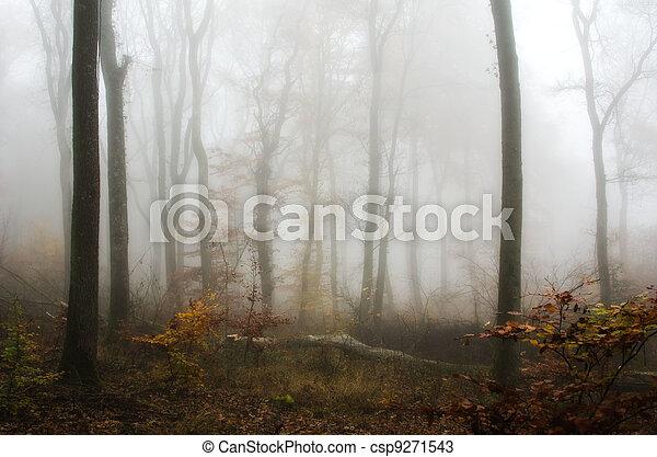 mist in the autumn forest - csp9271543