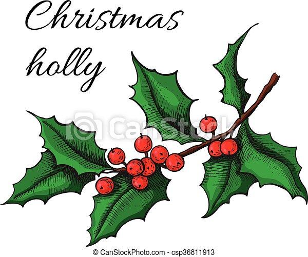 hand gezeichnet weihnachts mistletoe pflanze weihnachts. Black Bedroom Furniture Sets. Home Design Ideas