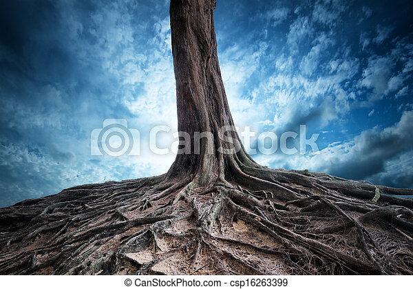 misterie, oud, licht, boompje, maan, landscape, achtergrond, landschap, magisch, wortels, night. - csp16263399