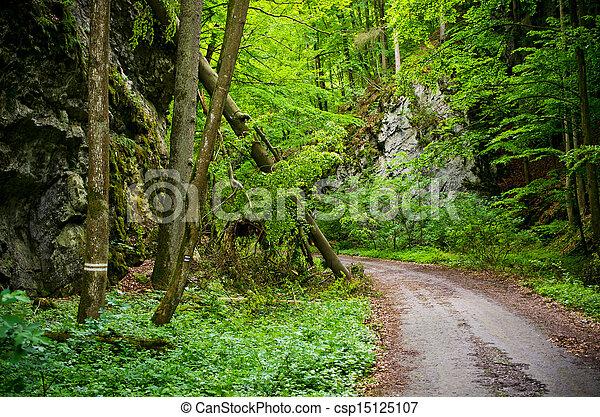 En el misterioso bosque - csp15125107