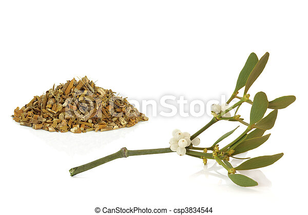 Mistletoe Dried and Leaf Sprig - csp3834544