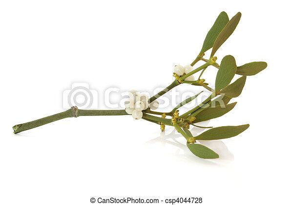 Mistletoe Leaf Sprig with Berries - csp4044728
