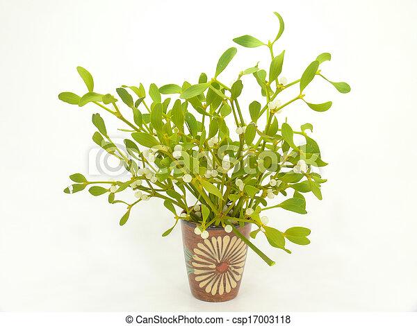 Mistletoes Sprig Of Mistletoe