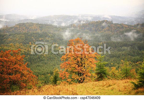 Misty autumn background - csp47046409