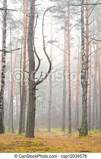 Misty autumn forest in the early morning - csp12034578