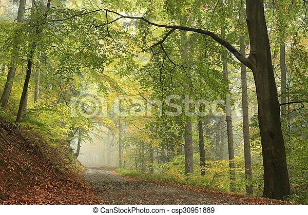 Misty Autumn forest - csp30951889