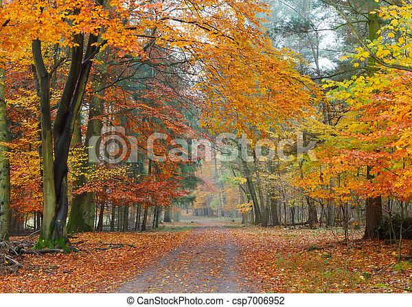 Misty autumnal park - csp7006952