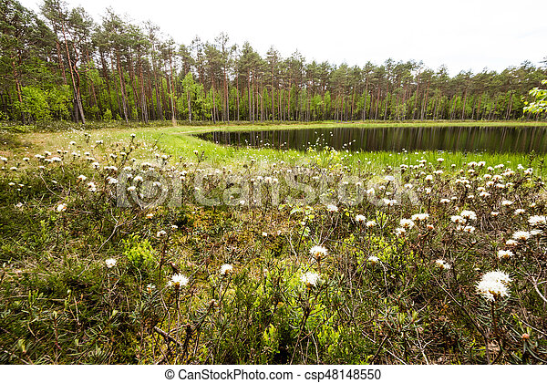 misty countryside landscape with lake in latvia - csp48148550