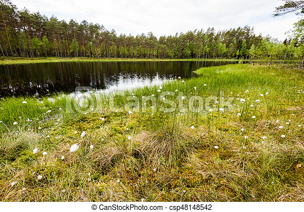 misty countryside landscape with lake in latvia - csp48148542