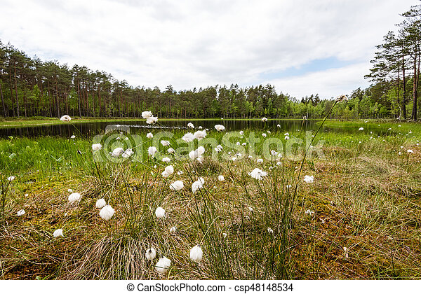 misty countryside landscape with lake in latvia - csp48148534