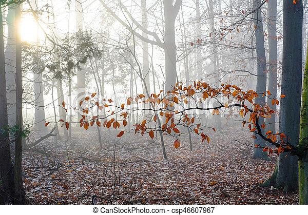 Misty countryside sunrise - csp46607967
