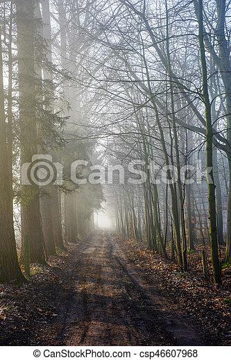 Misty countryside sunrise - csp46607968