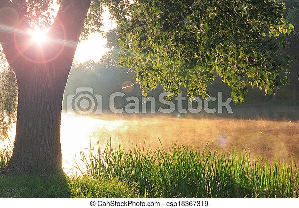 Misty dawn - csp18367319