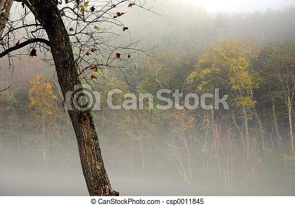 Misty fall - csp0011845