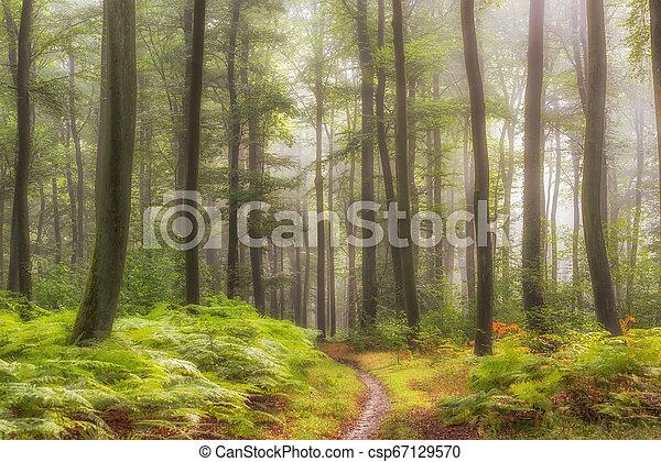 misty forest - csp67129570