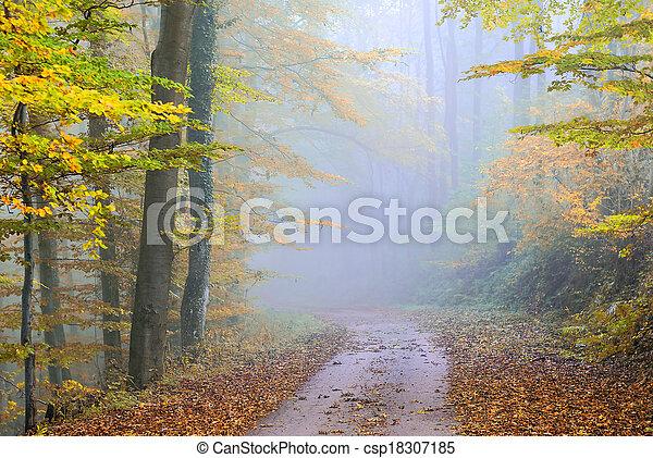 misty forest - csp18307185