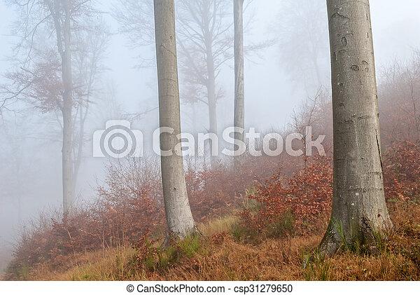 misty forest - csp31279650