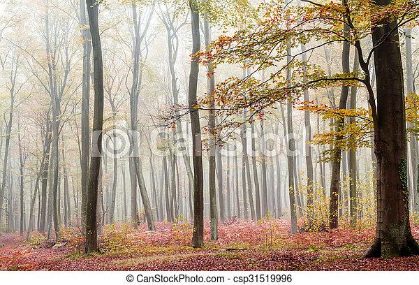 misty forest - csp31519996
