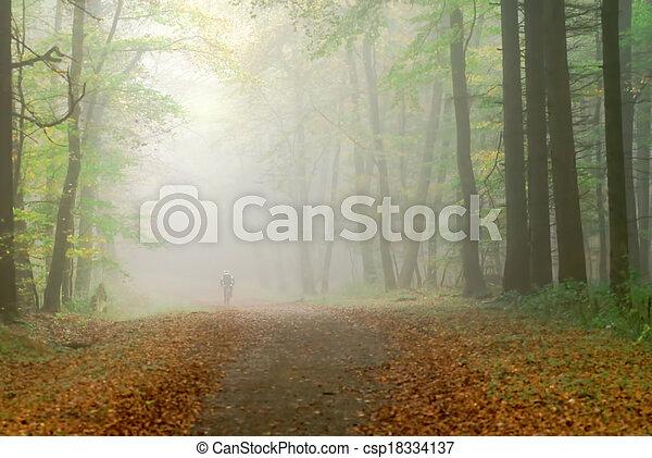 misty forest - csp18334137