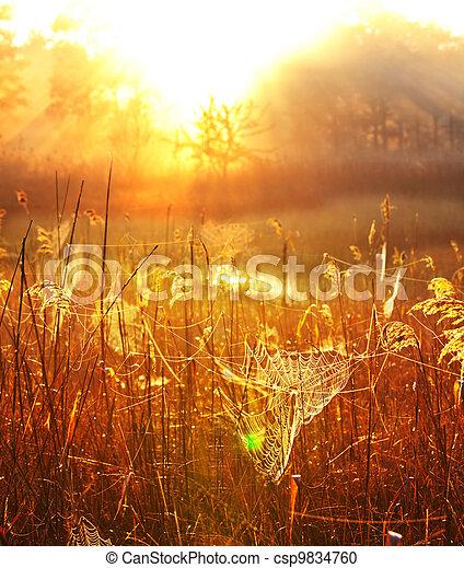 Misty lake - csp9834760