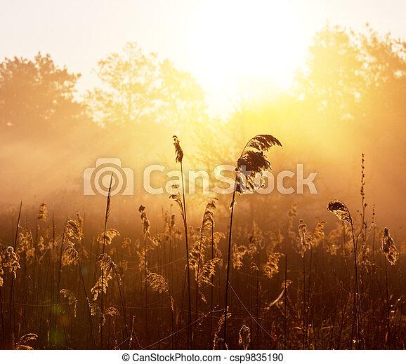 Misty lake - csp9835190