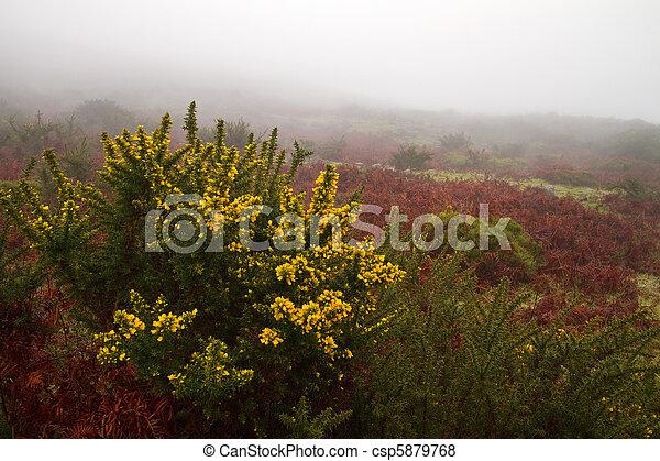 Misty landscape. - csp5879768
