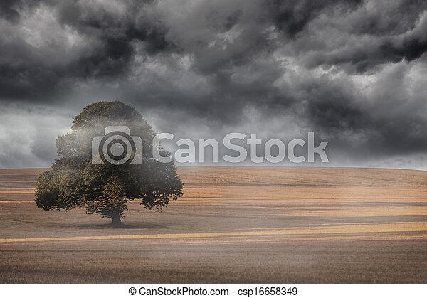 Misty landscape - csp16658349
