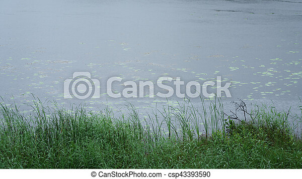 misty morning on scandinavian lake with rain ripples on water - csp43393590