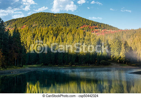 misty morning on the forest lake in mountains - csp50442324