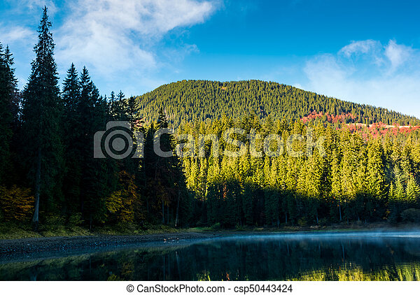 misty morning on the forest lake in mountains - csp50443424