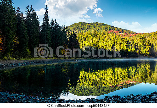misty morning on the forest lake in mountains - csp50443427