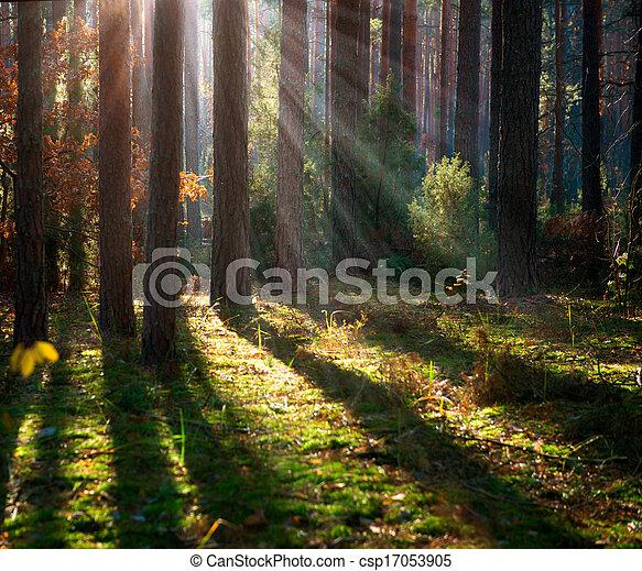 Misty Old Forest. Autumn Woods  - csp17053905