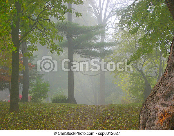 misty - csp0012627