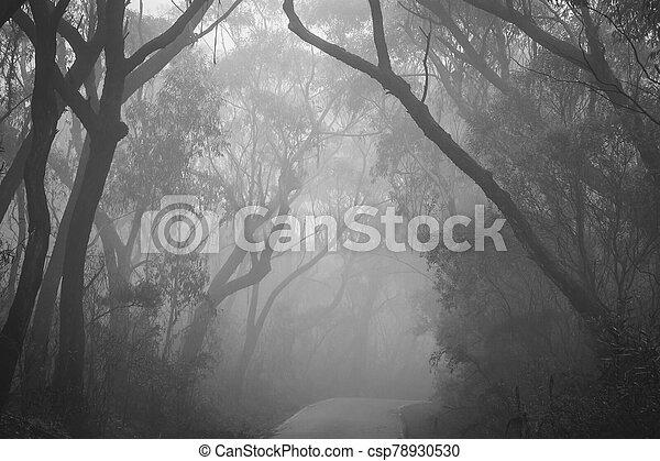 Misty road through Blue Mountains - csp78930530