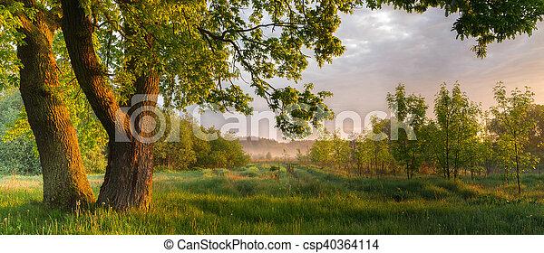 Misty sunny morning - csp40364114