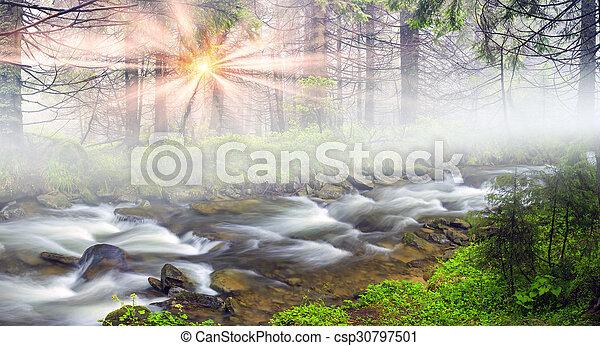 Misty thicket - csp30797501