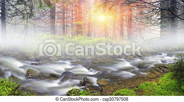 Misty thicket - csp30797508