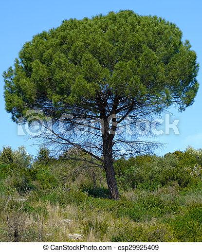 Mittelmeer Baum Kiefer Landschaft Baum Mittelmeer Stockfotografie Suche Bilder Und