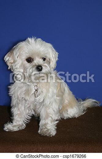 mix dog in studio - csp1679266